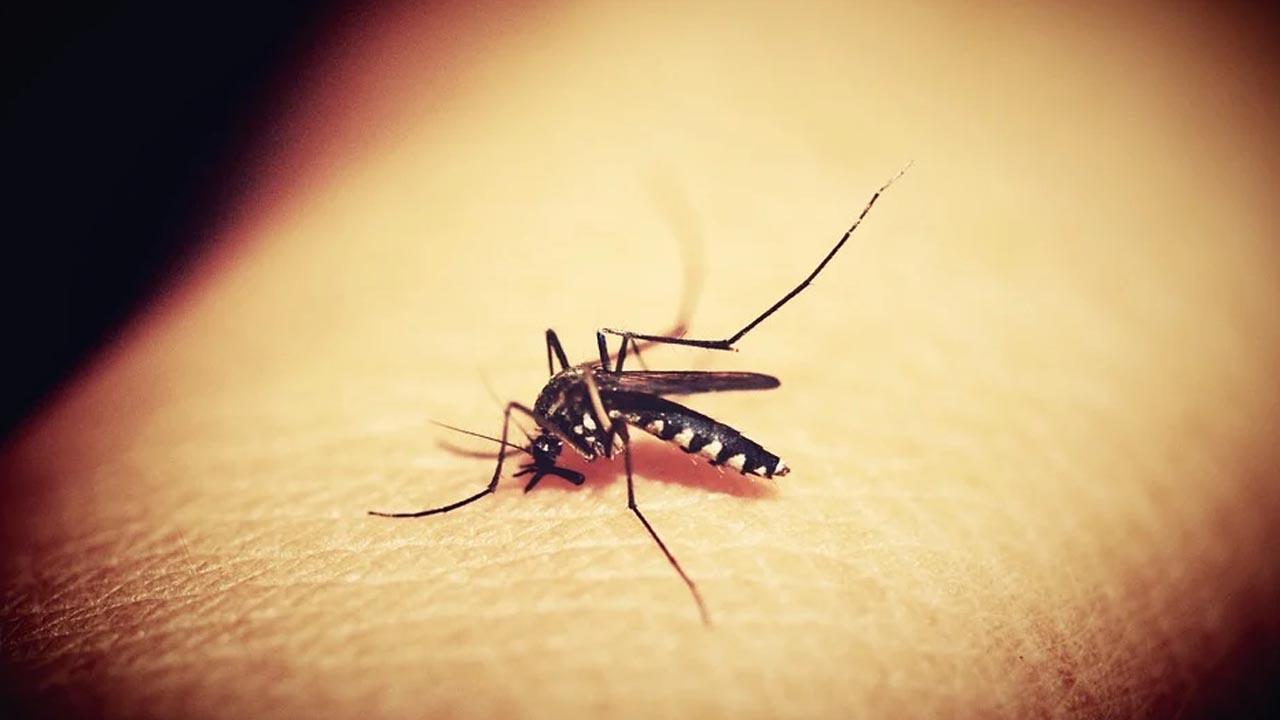 Jardim Planalto e Panorama terão nebulização contra a dengue hoje