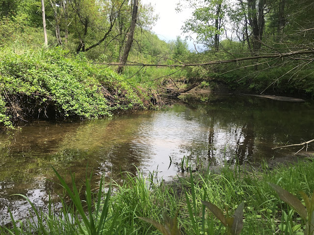 A small wild brook trout stream in massachusetts