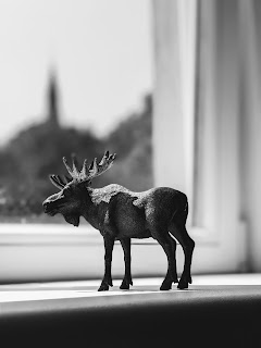 Black And White Photo Of A Moose