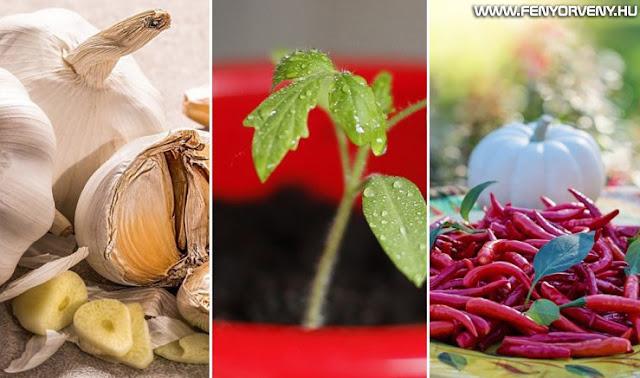 8 természetes háziszer a növényi kártevők ellen – ne mérgekkel harcoljunk!