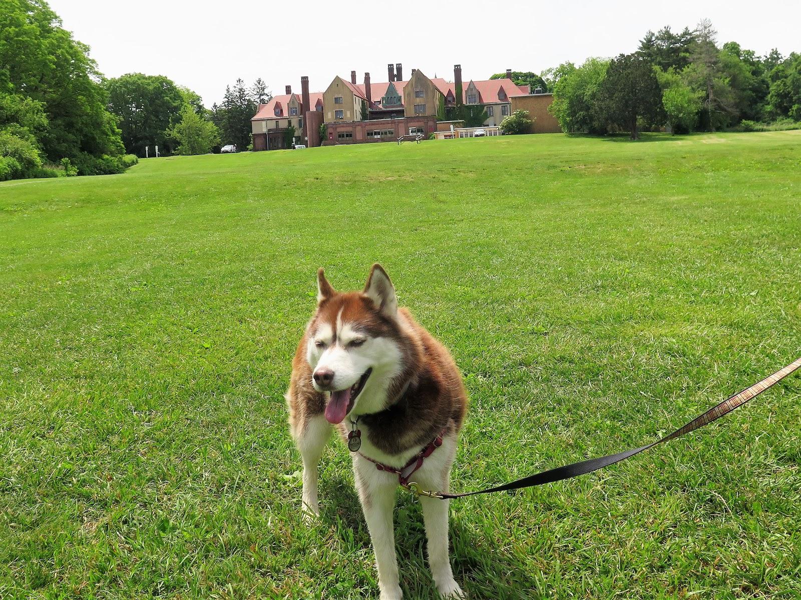 Local Dog Parks Long Island Ny