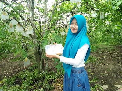 Jual Madu Asli Murni alami di Tulungagung Sendang Dono Geger Kedoyo Krosok Ngluruk Ngluntung Nyawangan Picisan Sendang Talang Tugu