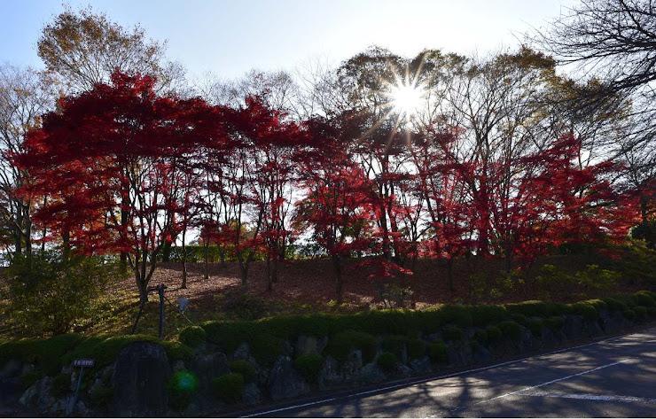 桜山公園の冬桜と紅葉