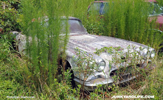 Weeds all around the white 1959 Corvette in the field.