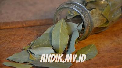 daun salam, khasiat daun salam, manfaat daun salam, kandungan daun salam