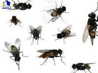 أنواع حشرات المنزل ,الأمراض التى تنقلها الحشرات المنزلية