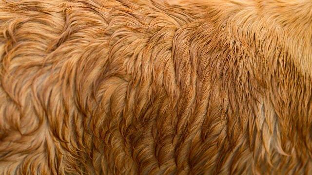 prevent dog hair loss
