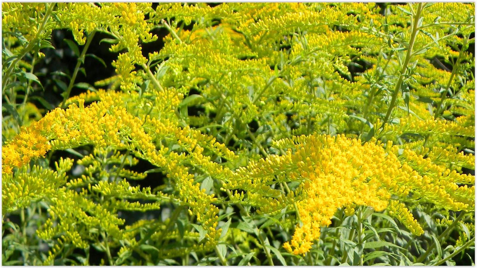 Menopauza: simptome şi plante care ameliorează stările neplăcute
