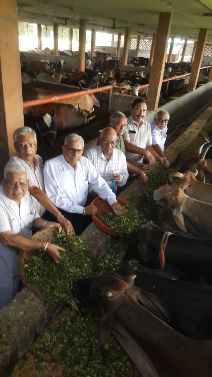 गौ सेवा समिति ने श्री कृष्ण गोधाम में की गो सेवा
