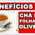 Benefícios do chá das folhas de Oliveira para saúde