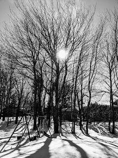 Winter Sun Over Tree And Swing, Sydney, Cape Breton Island