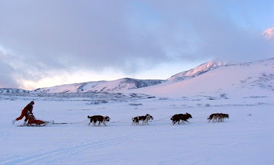 A team of sled dogs are pulling a sled across the snow.