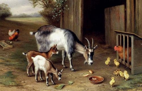 Keçi gıdıklar ve kümesteki tavuklar yağlı boya tablosu