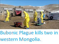 https://sciencythoughts.blogspot.com/2019/05/bubonic-plague-kills-two-in-western.html
