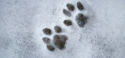 Šape u snegu