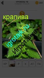 растет обычная крапива в саду 18 уровень 400 плюс слов 2