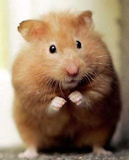 The Alzheimer's Hamster Within YOU | Alzheimer's Reading Room
