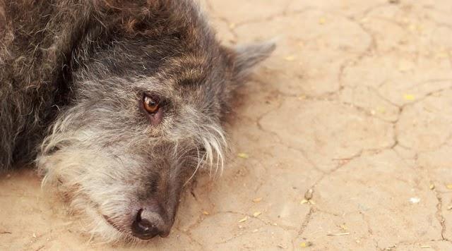 Kutyákat kínzott egy szabadkígyósi férfi