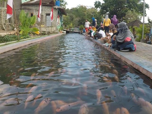 Memberi Makan Ikan di Bendung Lepen Kali Gajah Wong