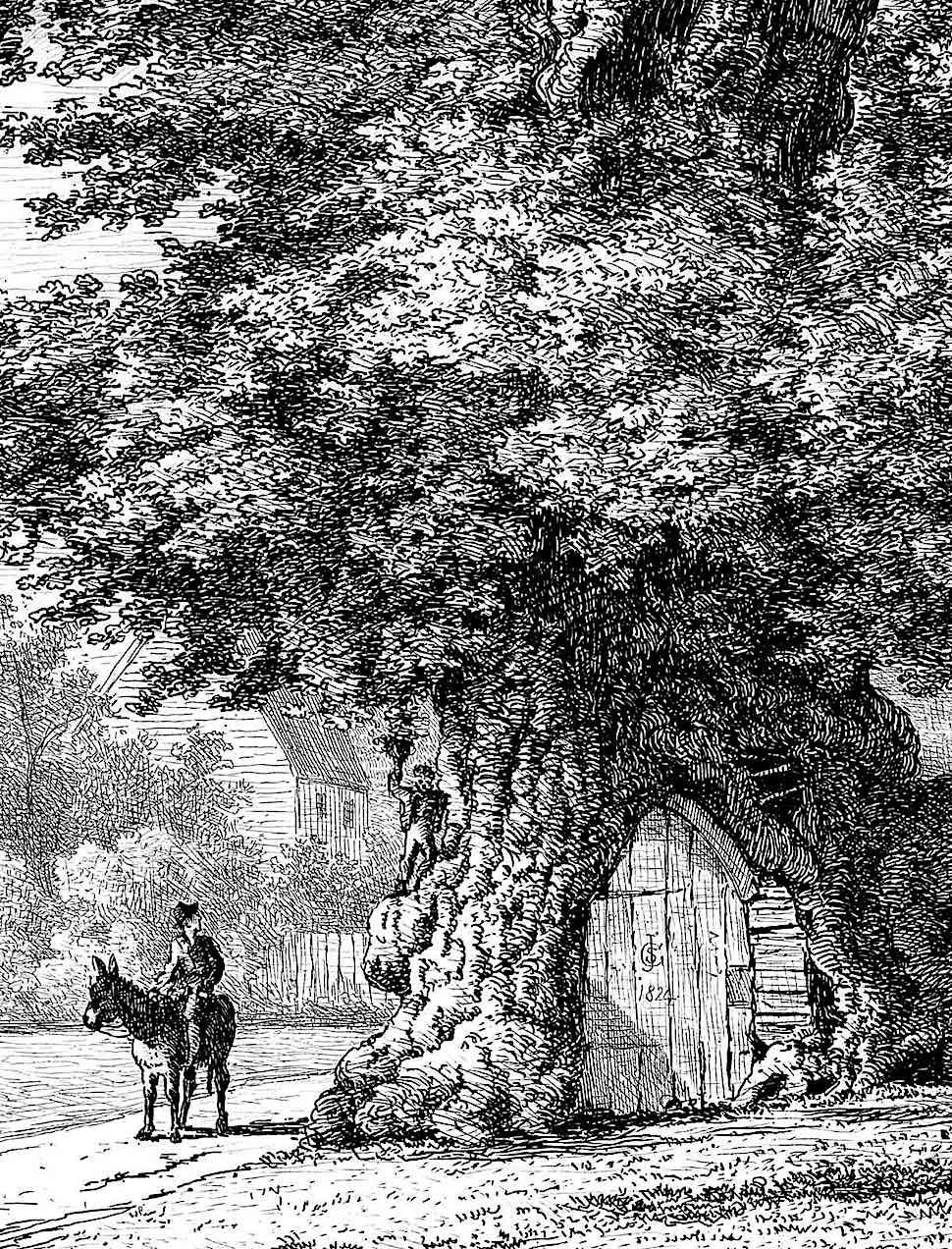Jacob George Strutt 1824, a tree as a home