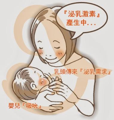 母奶乳汁分泌原理|認識泌乳素