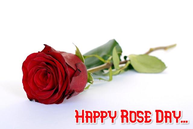 World Rose Day image
