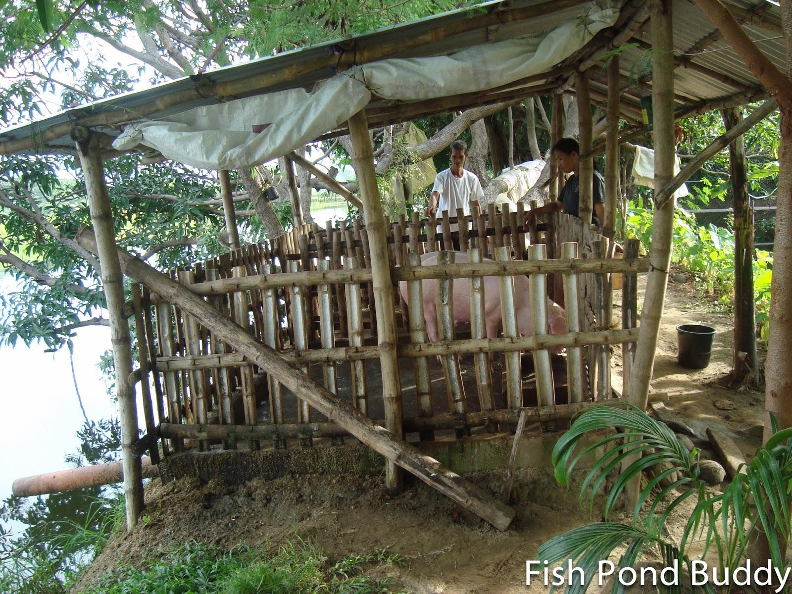 fish pond buddy growing livestock at the fish farm