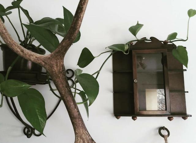 Artefakty - styczeń 2019 - stare gabloty i gdzie kupić surowce kosmetyczne