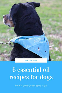Here are 6 natural essential oils on dogs recipes.  Essential oil and dogs for safety.  Use essential oils safe for dogs.  These save essential oils for dogs are used to make 6 natural recipes.  Dog essential oil recipes.  Make essential oils dogs skin and essential oils for smelly dogs.  How to make a calming essential oils blend for dogs, an anti itch roll on, and a spray for their bedding.  Get essential oil uses for dogs.  #diy #natural #essentialoils #pets #dogs