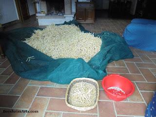 Tuscan white beans of Sorana dry inside after threat of rain