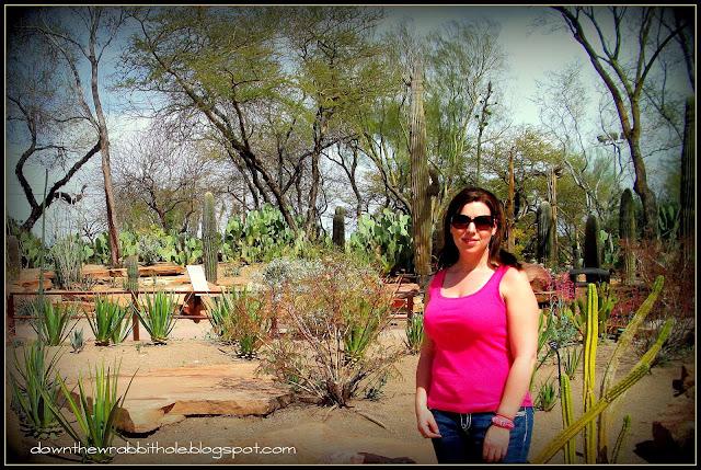 Las Vegas cactus, cactus garden Las Vegas