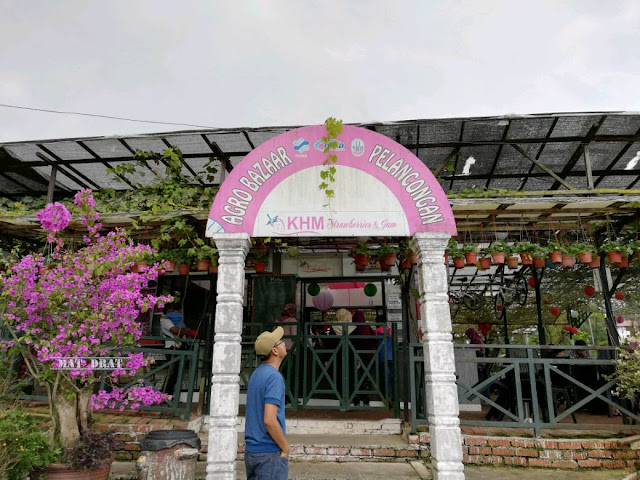 Tempat Menarik Cameron Highland Strawberry Farm Kampung Melayu
