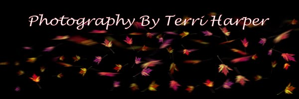 Photography by Terri Harper