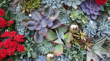 Árboles de Navidad con plantas suculentas en Longwood Gardens