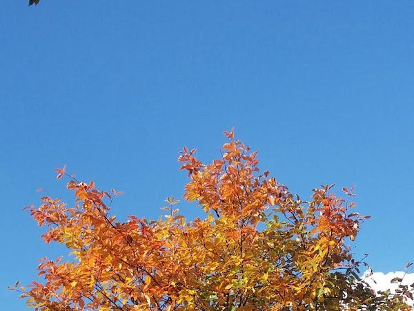 Autumn in Scotland