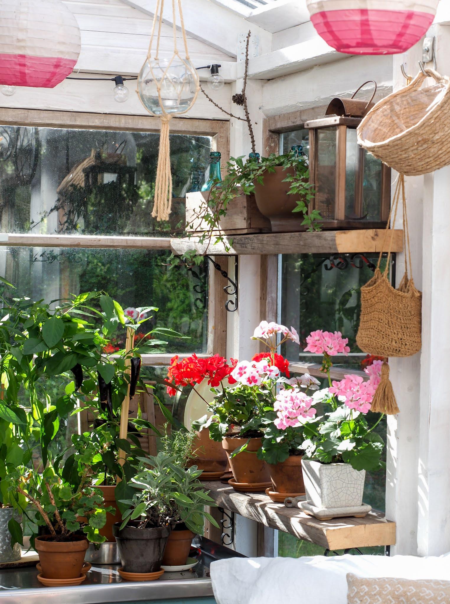kasvihuoneen valmistelu kesään