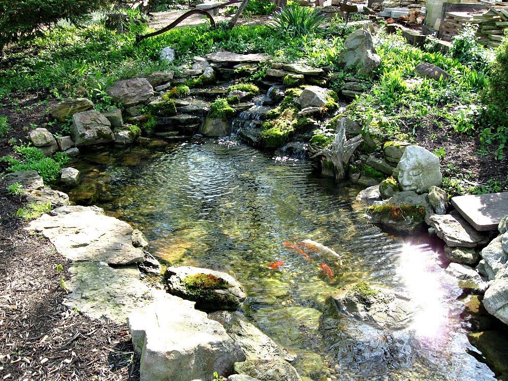 Shallow Garden Pond