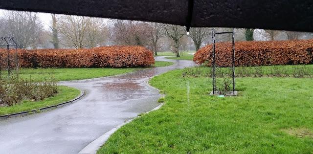 sade, sateenvarjo, puisto, puistotie