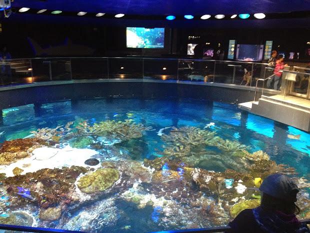 New England Aquarium Giant Ocean Tank