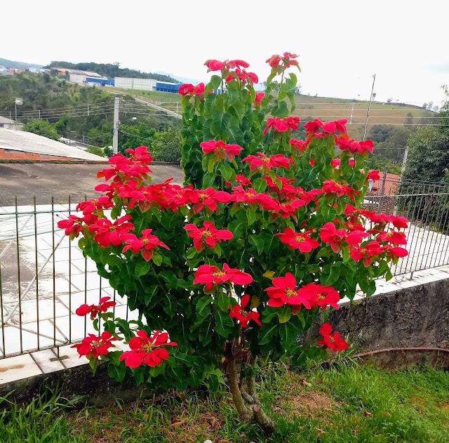A foto mostra essa lindas flores para todas as mães do Brasil e do mundo.