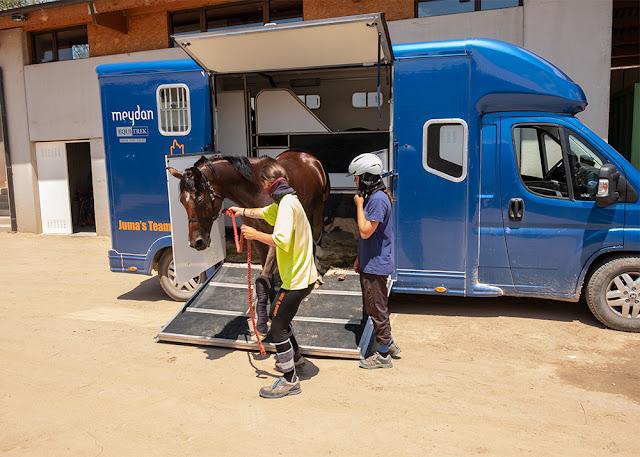 Transporte de caballos / Manu Torras