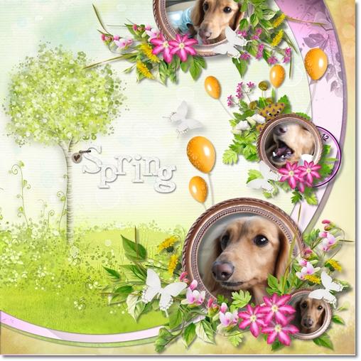 DSB  Spring