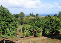 Beautiful view on the ocean - Botanical garden north of Hilo, Hawaii