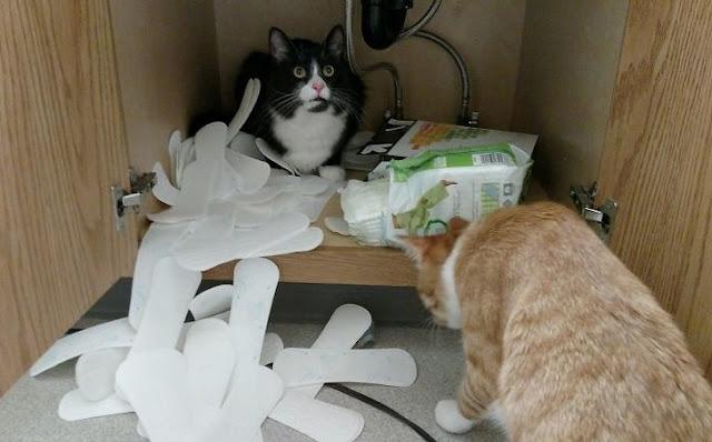 Com certeza a dona odiou os gatos