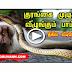 Unbelievable Video snake vs baboon unbelievable real fight