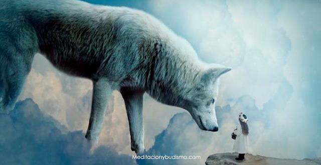 Descubre aquí tu animal espiritual