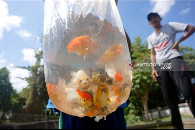 Pembudidaya ikan hias di Tulungagung keluhkan dampak cuaca ekstrem