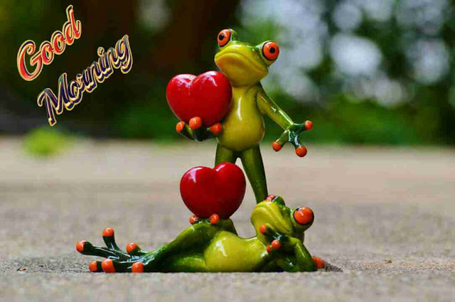 very funny good morning image of cute frog lovers