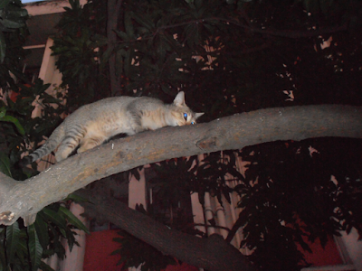 A Cat climbing tree pictures