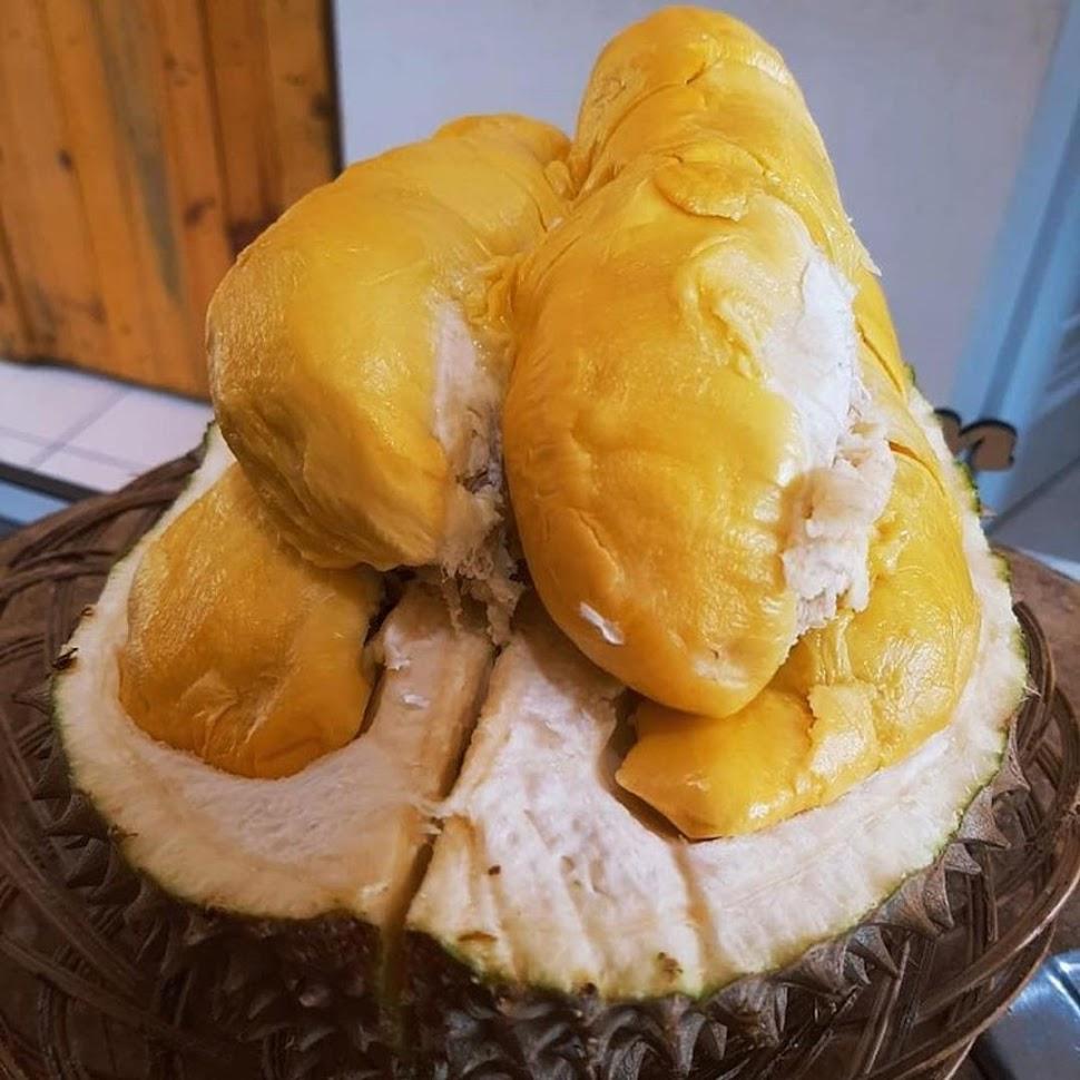 Bibit Tanaman Buah Durian Bawor Unggul varietas dijamin asli dan bergaransi Papua Barat